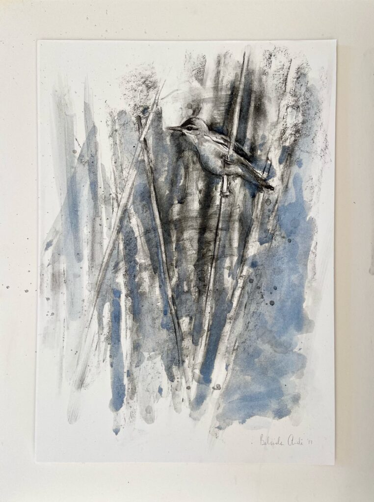 'Reed Warbler' Charcoal and Ink on paper - framed